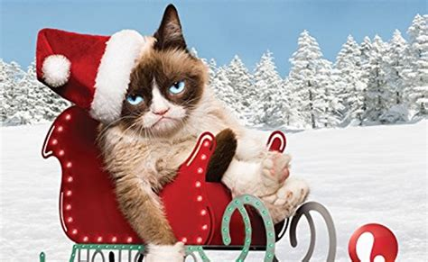 Grumpy Cat  Trailer Scores 1.4 Million Views, 5300 ...