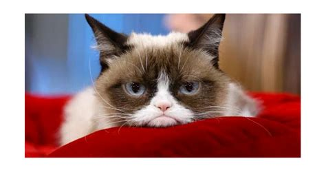 Grumpy Cat Video: Il video originale   Cose di Gatti