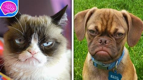 Grumpy Cat VS Grumpy Puppy!   YouTube