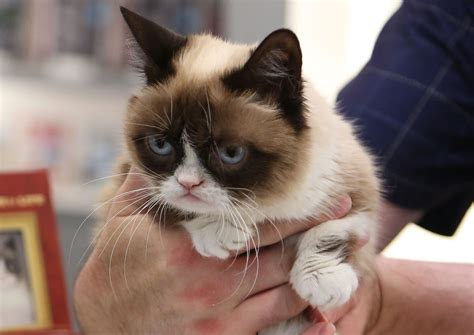 grumpy cat youtube | Hd Wallpapers