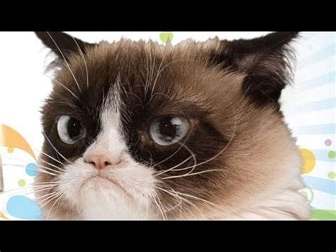 Happy 2nd Birthday, Grumpy Cat!   YouTube