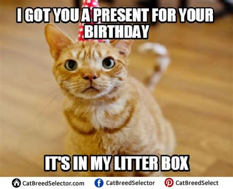 Happy Birthday Meme Cat | www.pixshark.com   Images ...