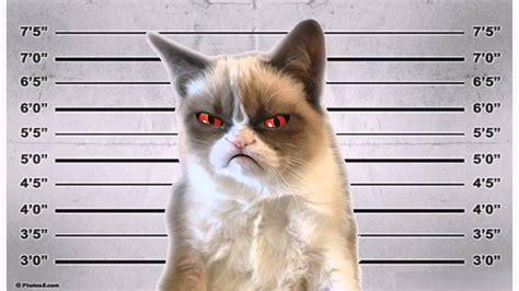 HARDCORE GRUMPY CAT SINGS  HARD KITTY    YouTube