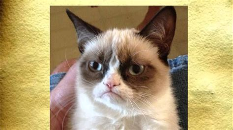 Historia Memów   Grumpy Cat   YouTube