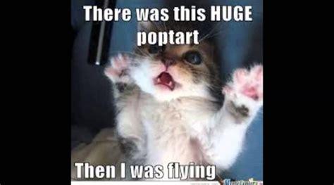 I Love Cats: Memes