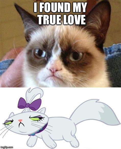 I love my cat meme