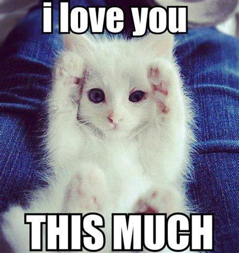 I Love You | Funny Pictures, Quotes, Memes, Funny Images ...