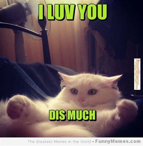 I Luv You Cat Meme   Cat Planet | Cat Planet