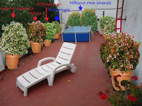 Ideas para plantas en terraza muy expuestas al sol, en ...