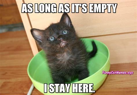If The Bowl Is Empty...   Funny Kitten MEME