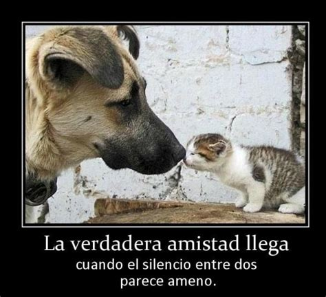 Imagenes Chistosas Amor Amistad Entretenidas | Imagenes de ...