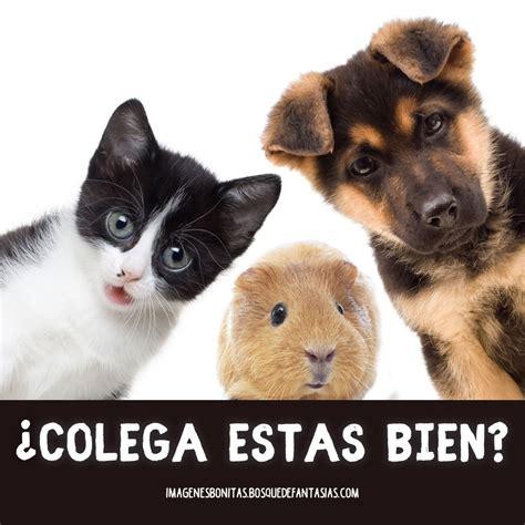 IMÁGENES CHISTOSAS ® Fotos graciosas y frases divertidas