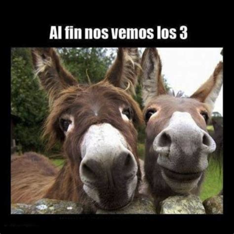 Imagenes Chistosas Graciosas Humor Sano | imagenes ...