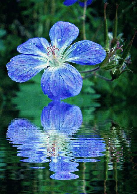 Imagenes Con Movimiento De Flores Azules Con Agua