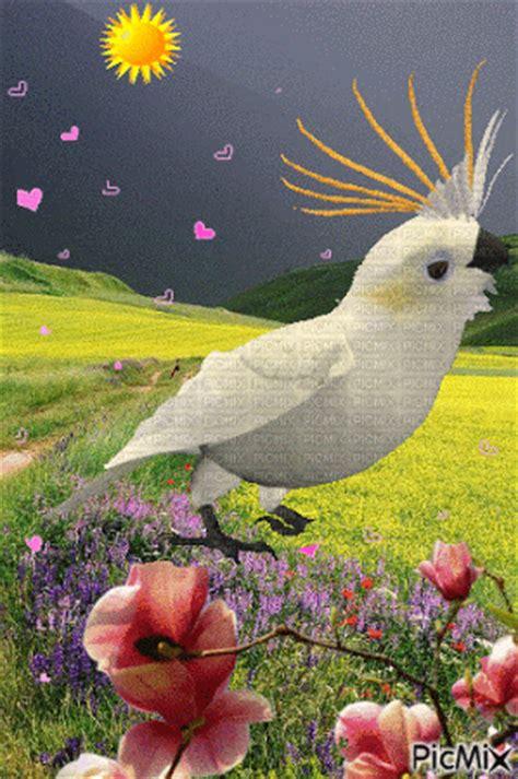 Imágenes De Aves Con Brillo Y Movimiento Hermosas Para ...