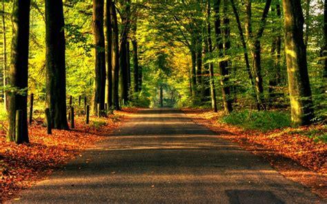 Imagenes de bosques   Imagenes de paisajes naturales hermosos