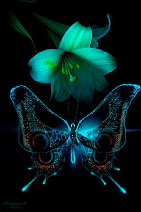 Imagenes De Flores Con Mariposas Con Movimiento