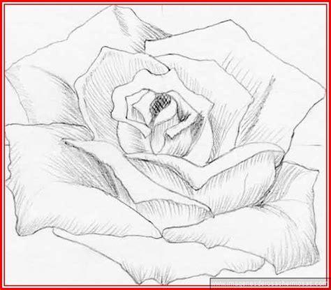imagenes de flores para dibujar a lapiz faciles | Imagenes ...