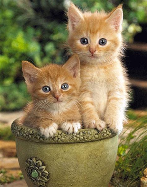 Imágenes De Gatos Con Movimientos En Los Ojos Para Descargar