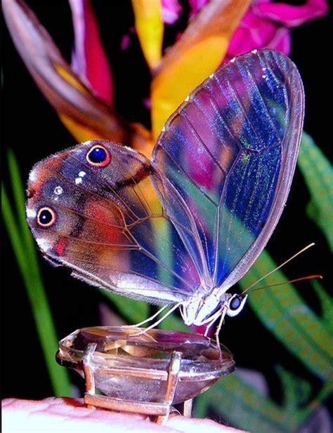 Imágenes De Mariposas Para Descargar Gratis con Fotos de ...