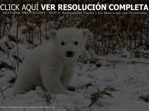 Imágenes De Paisajes Naturales Con Animales Salvajes ...