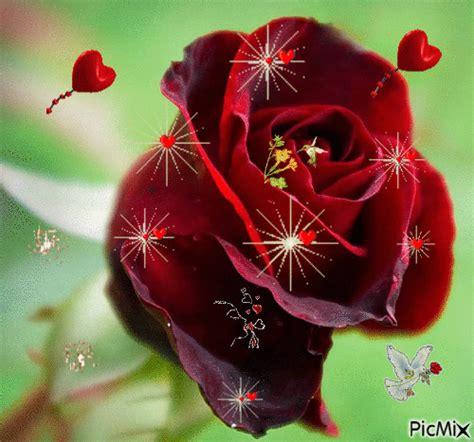 Imagenes De Rosas Con Movimiento