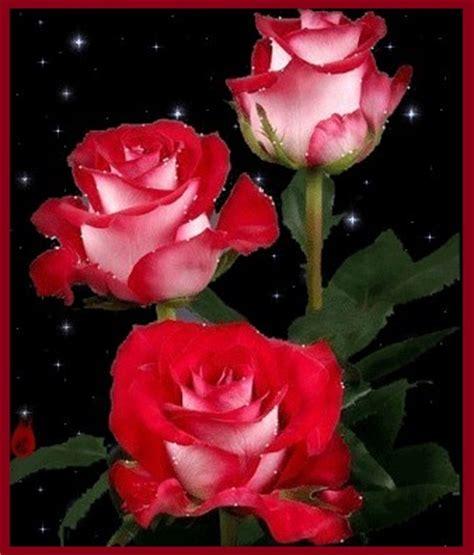 Imagenes De Rosas Rojas Para Descargar Gratis | Imagen De ...