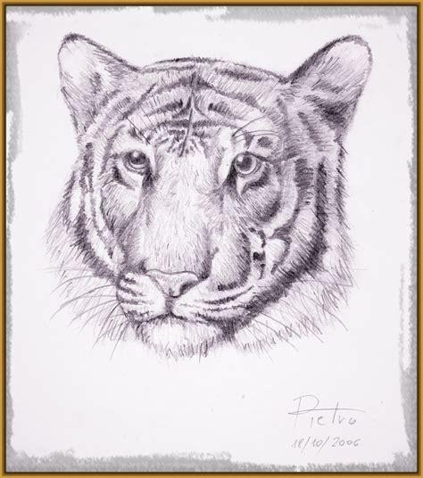 imagenes de tigres para dibujar a lapiz Archivos ...