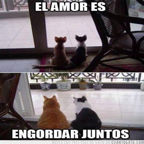 Imagenes Graciosas De Animales En Facebook   Mundo ...
