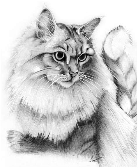 Imagenes para Dibujar Gatos a Lapiz   Dibujos de Gatos