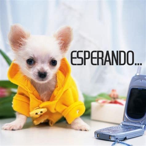 Imagenes Para El Perfil De Whatsapp Mas Lindos Del ...