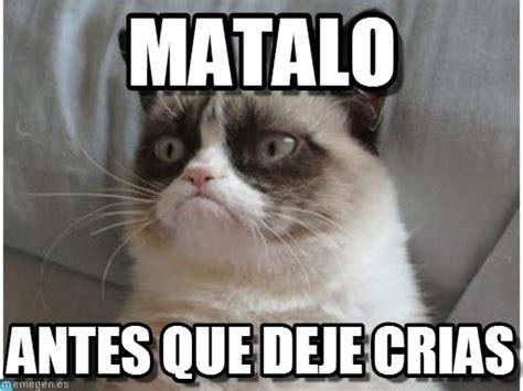 Imagenes y Memes graciosos de Gatos para Whatsapp | Fondos ...