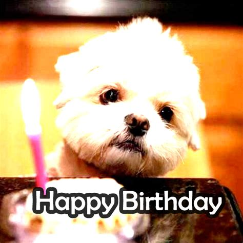 Incredible Happy Birthday Memes for you *Top Collections