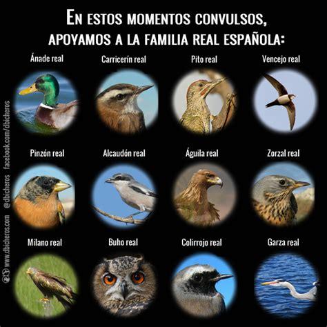 Infografías de naturaleza y aves | dbicheros