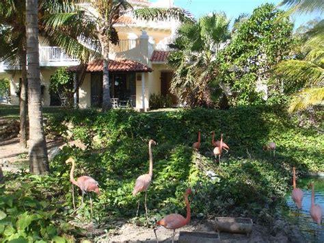 jardines bonitos – Bilde av IBEROSTAR Daiquiri i Cayo ...
