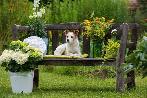 Jardines para casas con mascotas   Bricolaje10.com