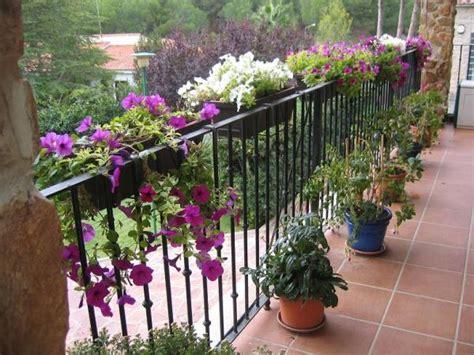 Jazmín para balcón   Tendenzias.com