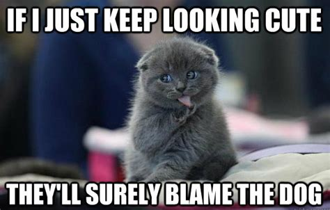 Keep Looking Cute   Funny Cat Meme