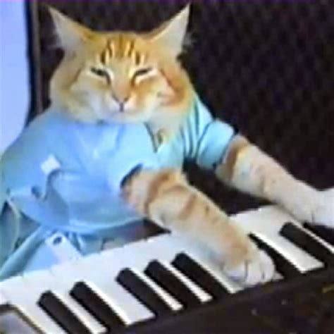 Keyboard Cat | Know Your Meme