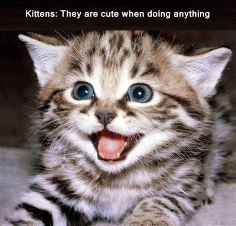 Kitten meme by Unuspartum on DeviantArt