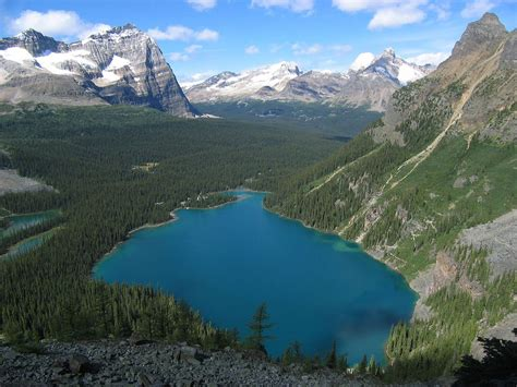 Lake O Hara   Wikipedia