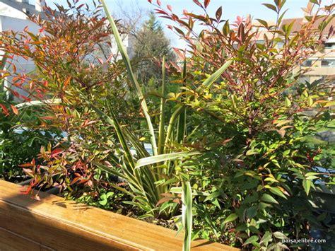 Las 6 mejores plantas de sol para terrazas y áticos ...
