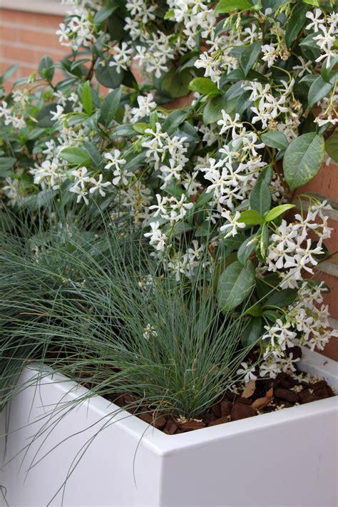 Las 9 mejores plantas para terrazas | La Habitación Verde