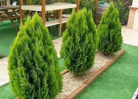 Las Mejores Plantas para Terrazas con Sol