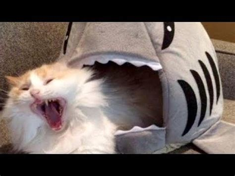 LAUGH SO HARD YOU LL CRY   Funniest CAT VIDEOS compilation ...