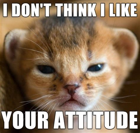 Little,Cat,Meme