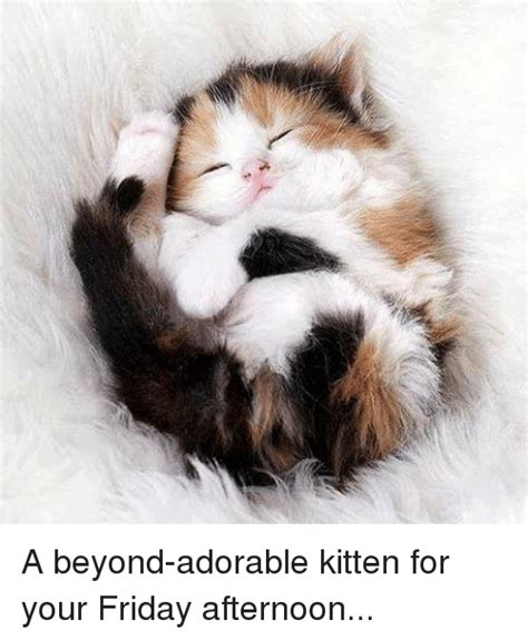 Lo a Beyond Adorable Kitten for Your Friday Afternoon ...