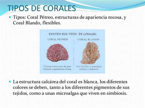 Los corales del fondo marino