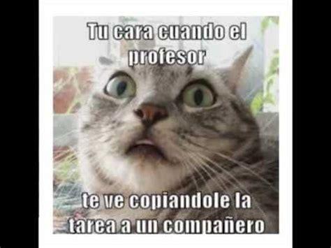Los mejores memes de Animales graciosos Mascotas gatos ...
