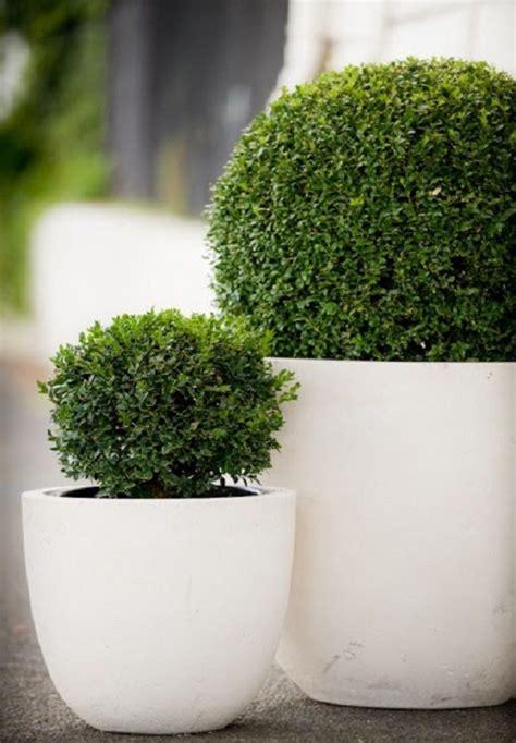 Maceteros o contenedores para ambientes modernos | Plantas